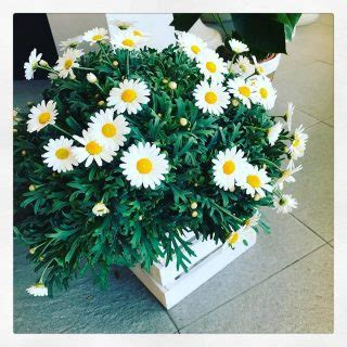 fiore inizia con la a fiori iniziano con la lettera m dell alfabeto e il