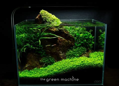 Green Machine Aquascape 163 best images about aquariums on planted aquarium aquarium set and nature