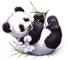 best 25 pandas ideas on pinterest panda panda bear and