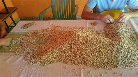 Bio Sil Inokulant prodajem zeleni grah 28030 poljoprivredni proizvodi