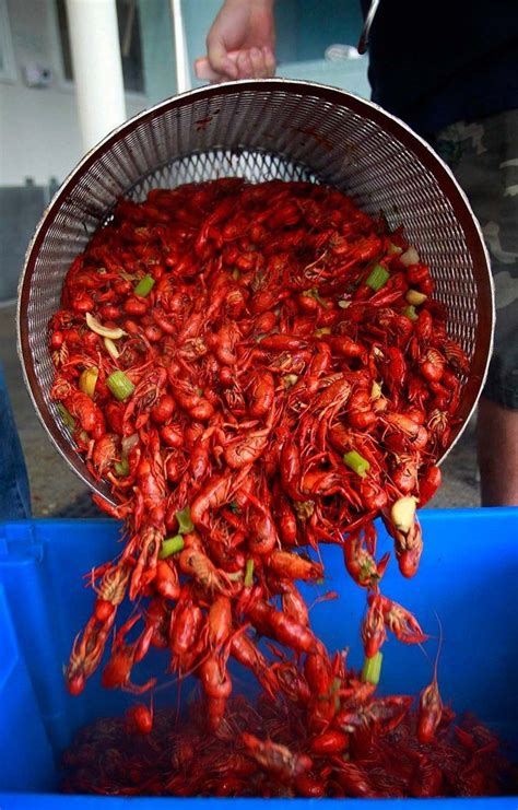 cajun traditions 25 best louisiana culture and cajun traditions images on