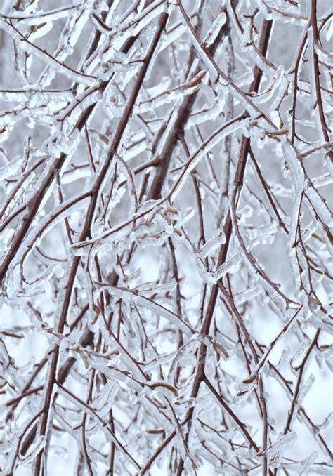 Wann Pflanzen Winterfest Machen by Palmen Winterfest Machen Gartenpalmen Winterfest Machen