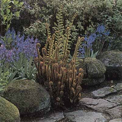 Fern Garden Ideas Fern Garden Ideas Howstuffworks Fern Garden Ideas