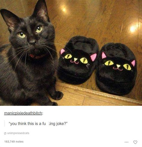 funny cat memes  prove cats  rule  internet