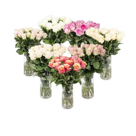 plant food for cut flowers bulk speciality roses woolworths co za
