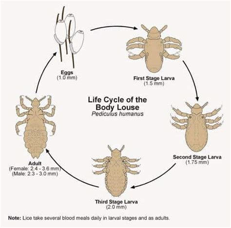 How Can Lice Live On Furniture by How To Get Rid Of Lice Naturally