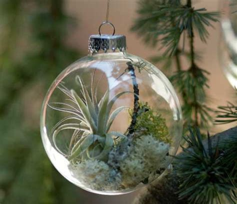 holiday wreaths and tree ornaments with natural plants