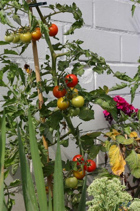 Garten Pflanzen August by 12 12 Im August Garten Und Pflanzen Kompromisslos