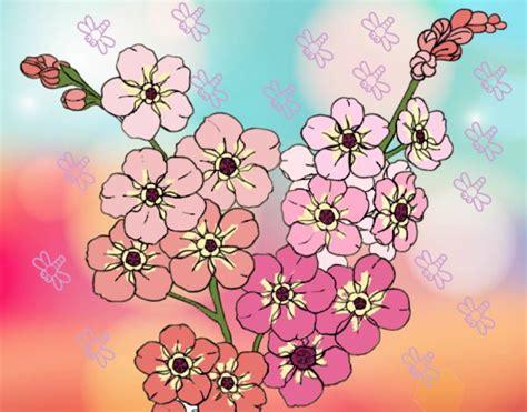 fiori di ciliegio disegno disegno fiore di ciliegio colorato da utente non