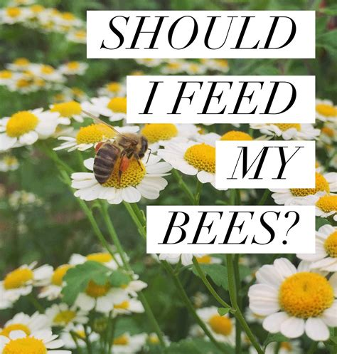 can i raise bees in my backyard can i raise bees in my backyard 28 images can i keep