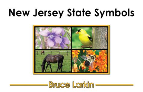 i my new jersey books new jersey state symbols grade book wilbooks