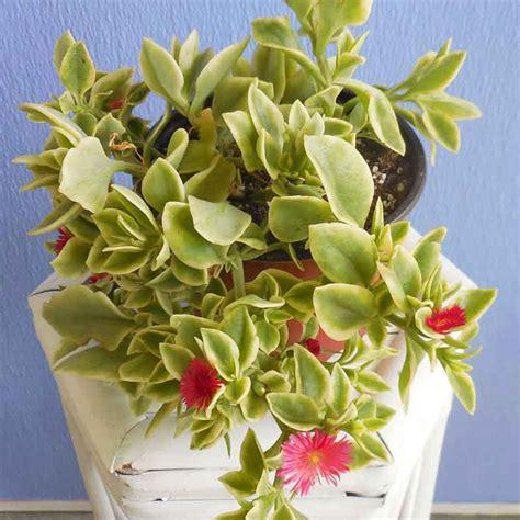buy house plants online canada stunning indoor plants online photos interior design ideas angeliqueshakespeare com