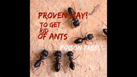 how to get rid of ants in bedroom how to get rid of ants naturally in the bedroom scandlecandle
