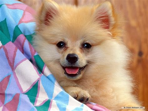 dog walpaper the wallpaper backgrounds dog wallpaper