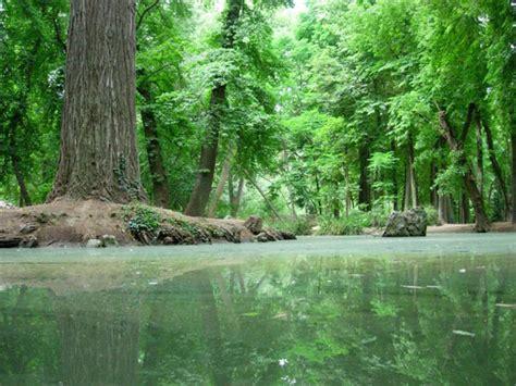 imagenes de bosques otoñales 191 c 243 mo se formaron los bosques
