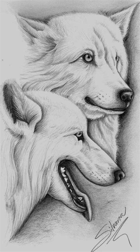 Dibujar Animales Salvajes A Lapiz Imagui | como dibujar animales salvajes a lapiz imagui