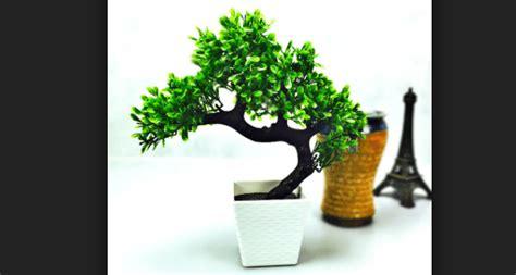membuat bonsai hias cantik menawan bennisobekticom