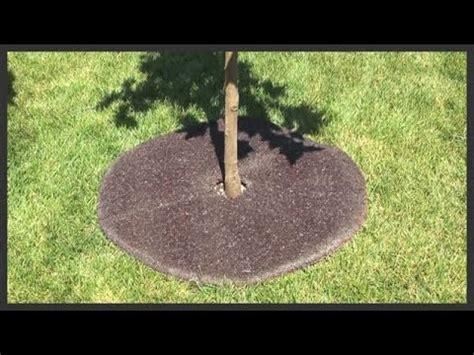 tree set go around tree how to install a tree ring