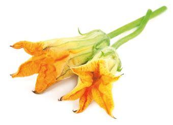 fiori di zucca ristorante strozzapreti con fiori di zucca gamberi e pomodorini la
