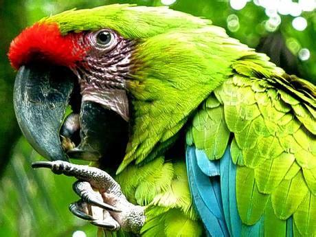 jurassic jungle boat ride cost costa rica family and other animals q costa rica