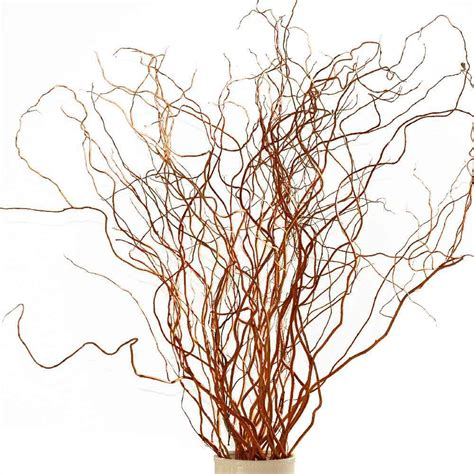 Flower For Home Decoration by Red Curly Willow Branches Fresh