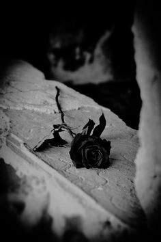 imagenes de rosas negras con sangre 1000 images about rosas negras on pinterest black roses