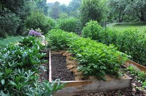 How To Keep Pests Away From Garden - what to plant now for a fall vegetable garden a way to garden