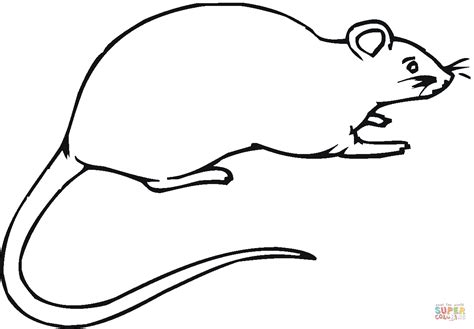 rat 16 coloring page free printable coloring pages