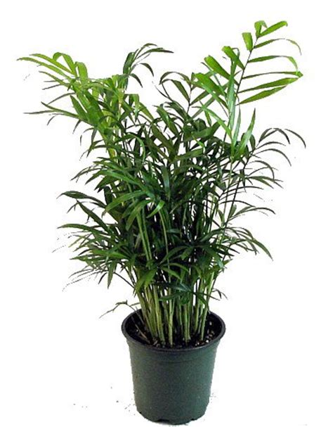 23 low light houseplants that are easy to maintain and 23 low light houseplants that are easy to maintain even if