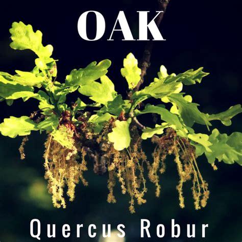 fiori di bach oak floriterapia con i fiori di bach il sito italiano di