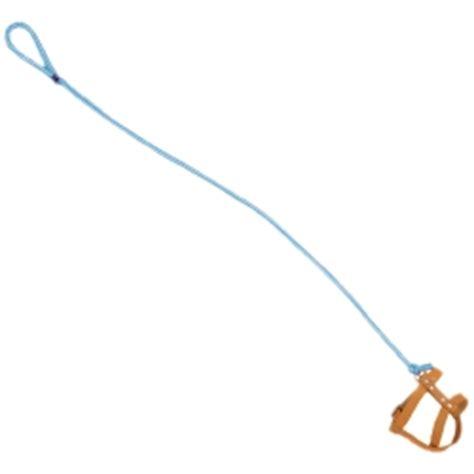 invisible leash invisible leash