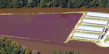 combating cafos | concentrated animal feeding operations
