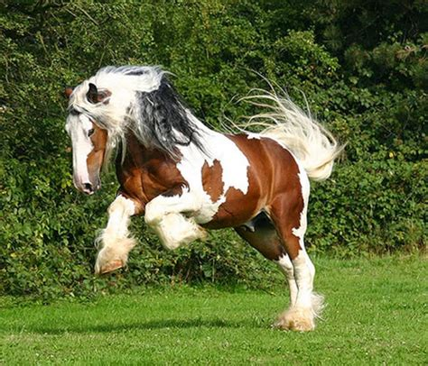 dynamic views dynamic views most most beautiful horses in the world in