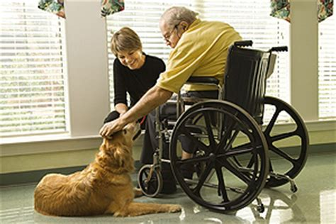 therapy dogs career animal assisted therapy careers