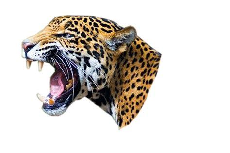 imagenes jaguar you jaguar png images free download