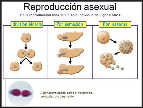 preguntas interesantes sexuales la reproducci 211 n ahora o nunca