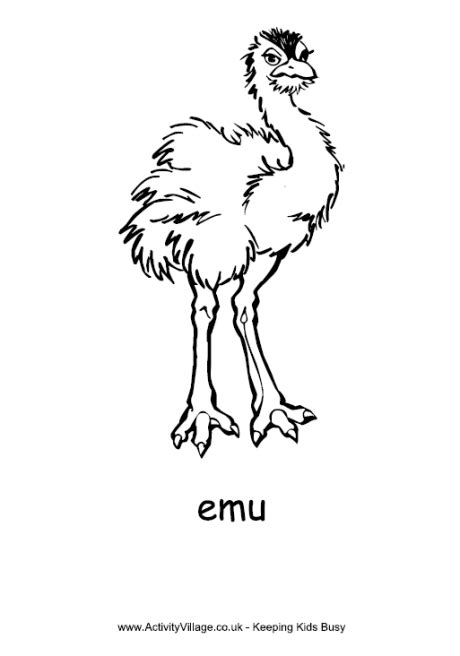 emu coloring page free simple outline emu coloring page zoo activities
