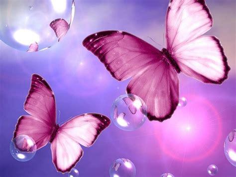 imagenes de mariposas bonitas y fondos de pantalla de mariposas rosadas fondos de pantalla gratis