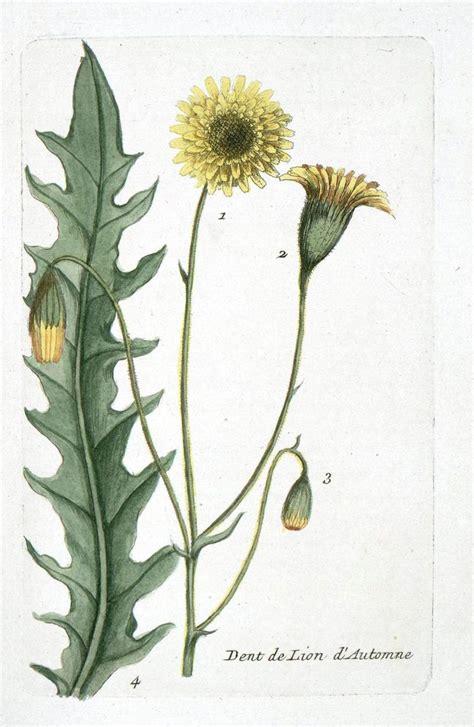 Botanic Botanical Vintage Botanical Print