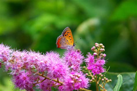 Garten Pflanzen Sommer by Natur Blumen Pflanzen 183 Kostenloses Foto Auf Pixabay