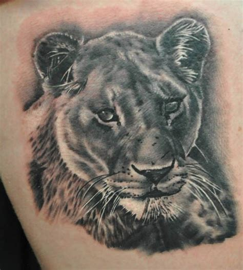 female lion tattoo designs lioness designs ideas and meaning tattoos for you