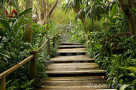 pathways   jungle royalty  stock photography