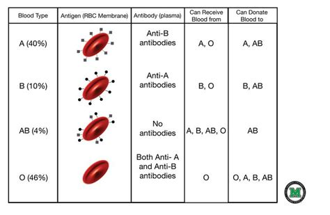 Blood Types And Transfusions Worksheet by 26 Best Images About Home School Science On