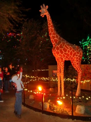 zoo lights phoenix az holidays in phoenix at zoolights