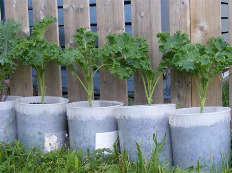 Container Gardening 101 Halifax Garden Network Gardening 101 Vegetable