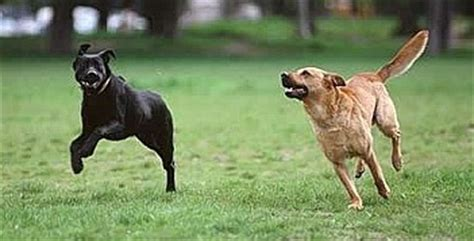 dogs at play stop barking obedience classes wi aggressive 53716 sit means