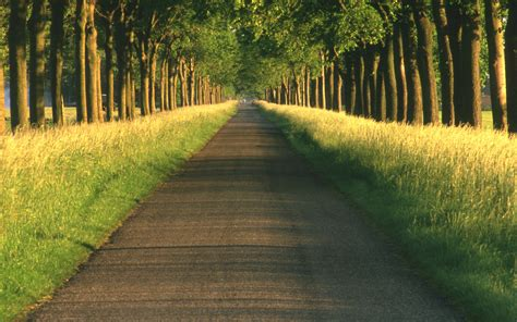 pathway pictures beautiful pathway wallpaper