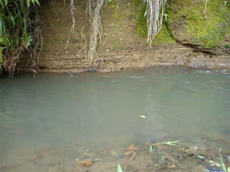 info kolam hias  memancing ikan memancing  sungai