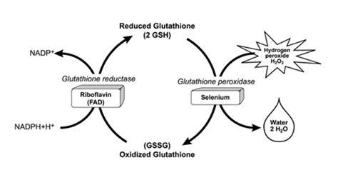 alimenti ricchi di glutatione selenio e tiroide