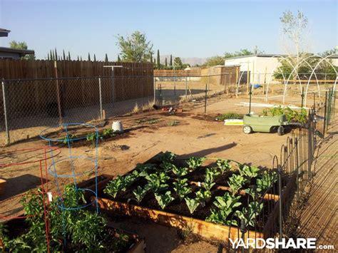 Desert Vegetable Garden Landscaping Ideas Gt Desert Vegetable Garden Yardshare
